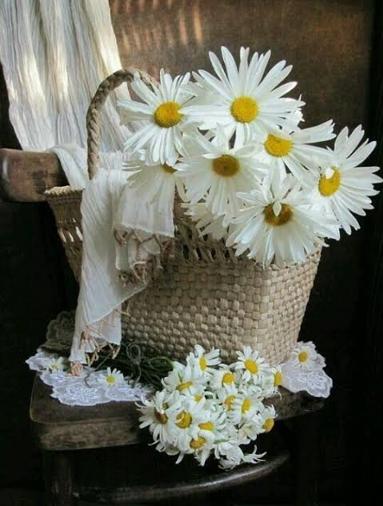 ดอกเดซี่