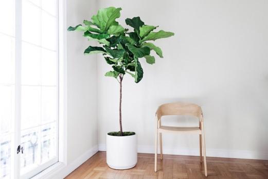 15 ต้นไม้ฟอกอากาศ ช่วยสุขภาพดี ชีวิตมีสุข - phuyings